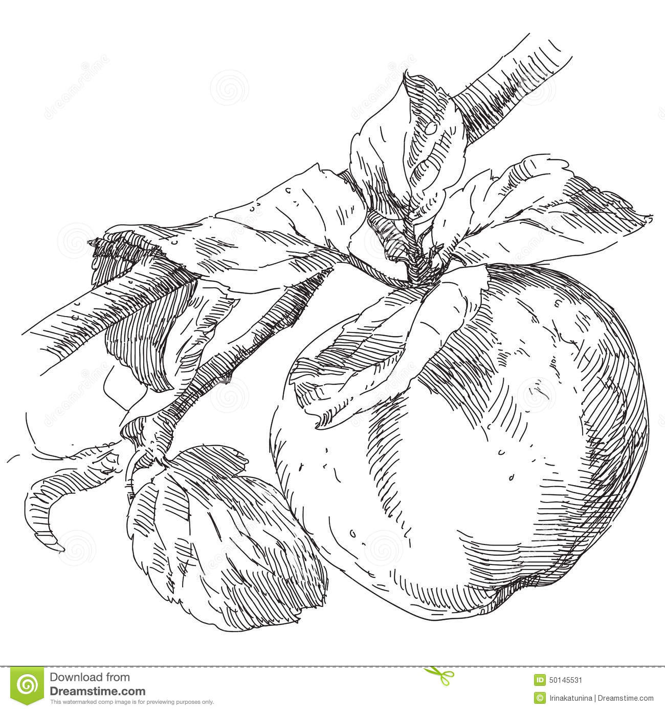 Hand Drawing Apple On Branch Stock Vector
