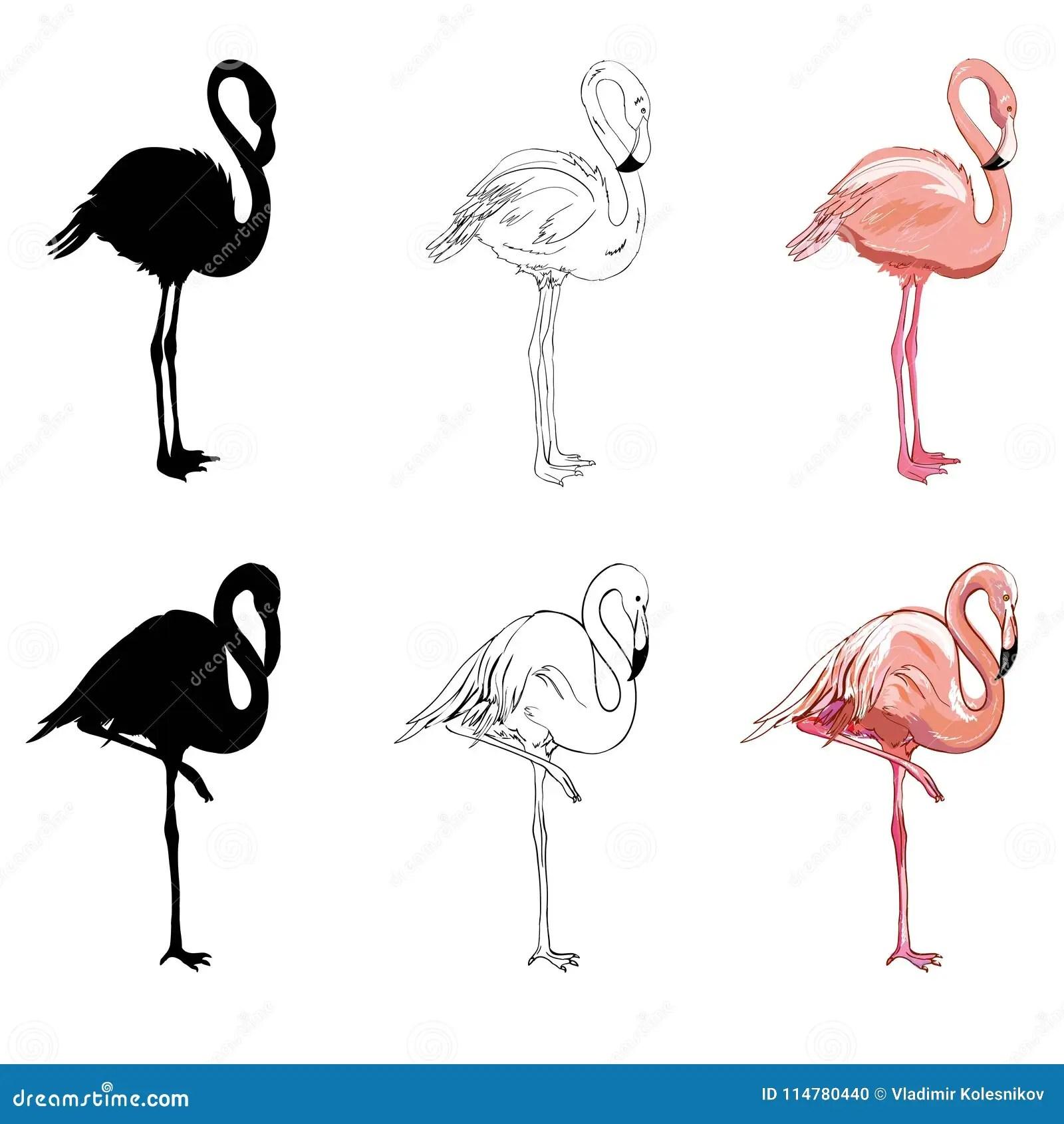 hand drawing flamingos vector