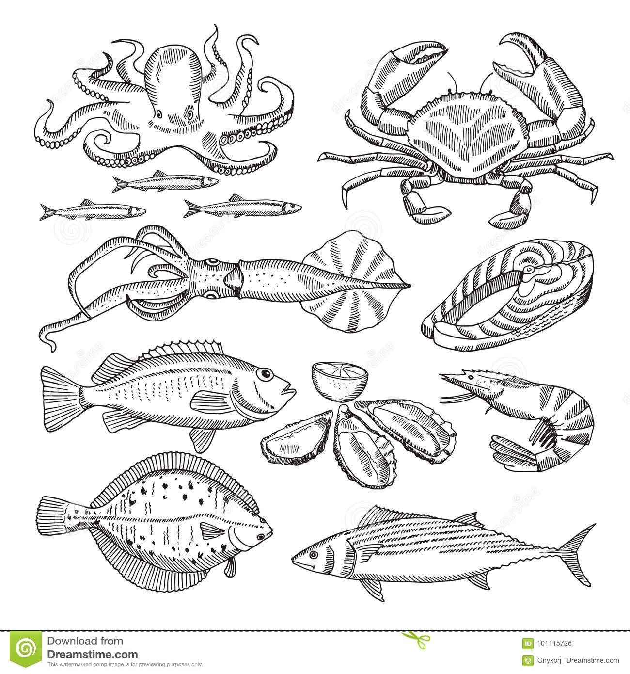 Hand Drawing Vector Illustrations Of Sea Food For