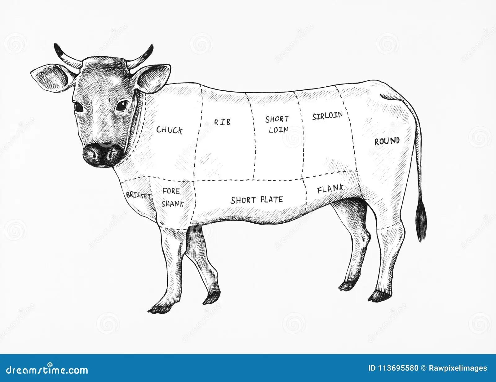 Hand Drawn Beef Cartoon Vector