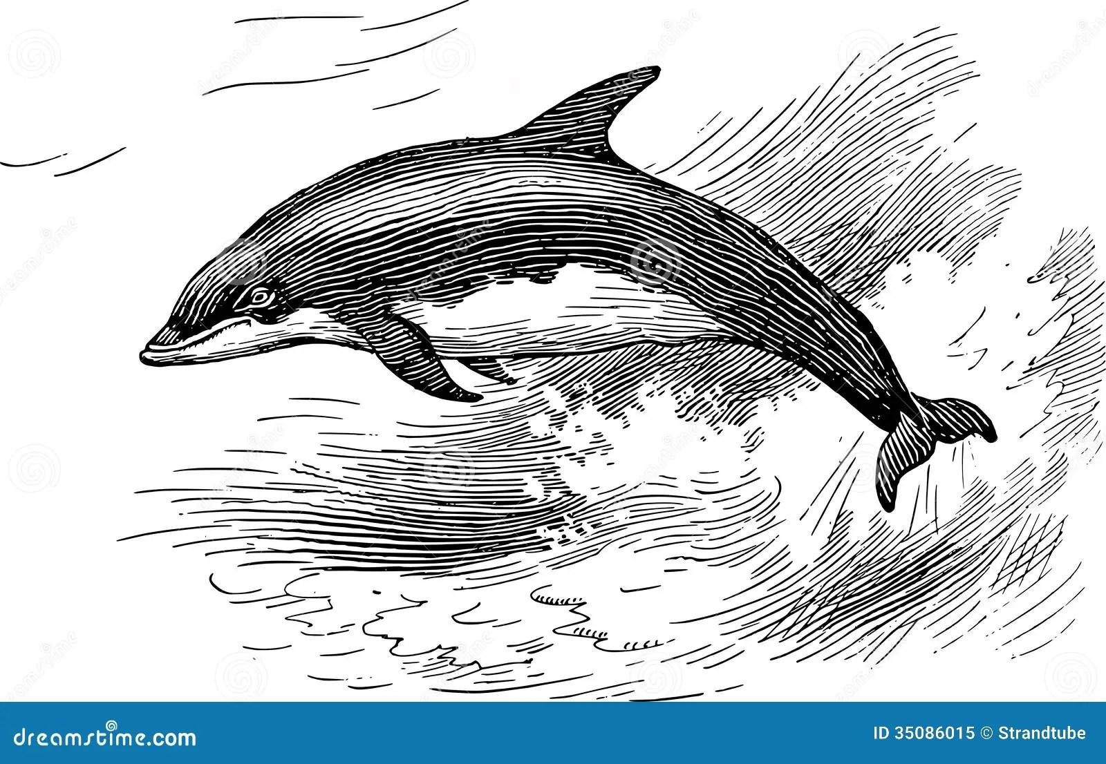 Dolphin Stock Illustration Illustration Of Monochrome