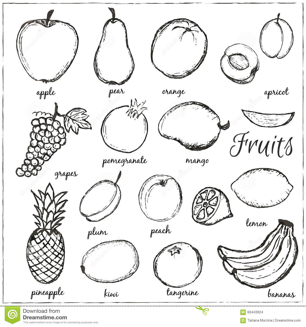 Hand Drawn Doodle Fruits With Name. Stock Vector