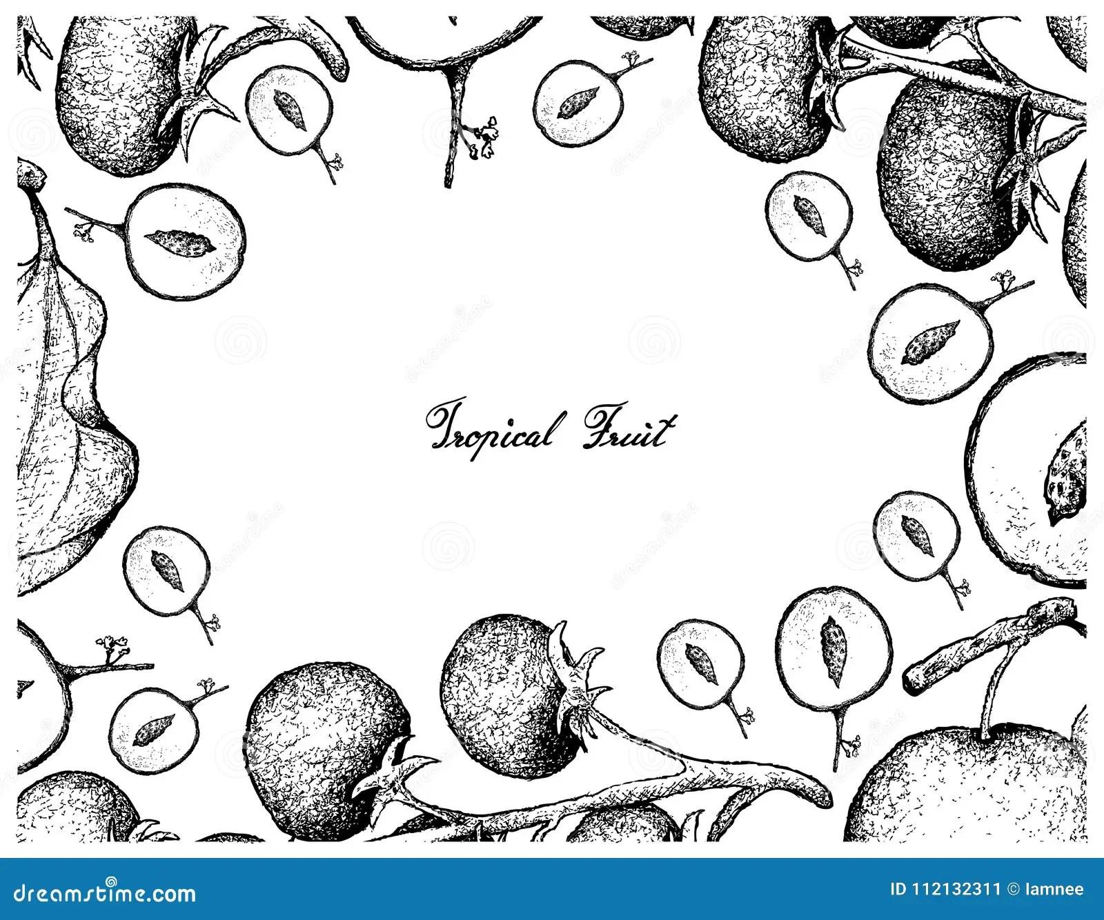 Gtomato Plant Stock Illustrations 179 Gtomato