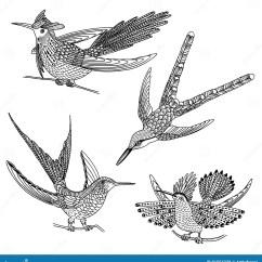 Hummingbird Diagram Of Color Volcanic Plug Pics Drawn Hummingbirds Impremedia
