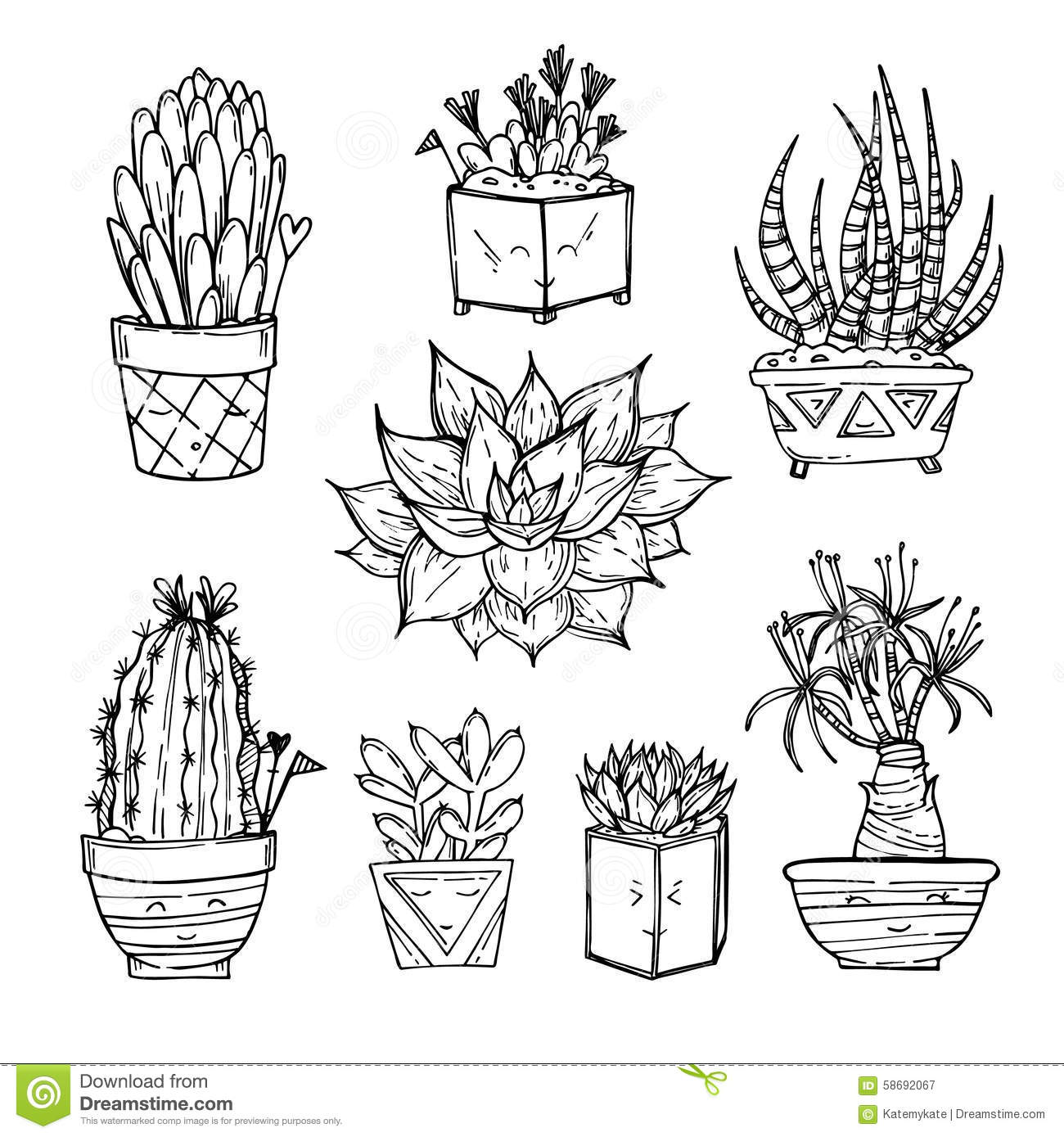 Cactus And Succulents Collection In Small Flowerpots On