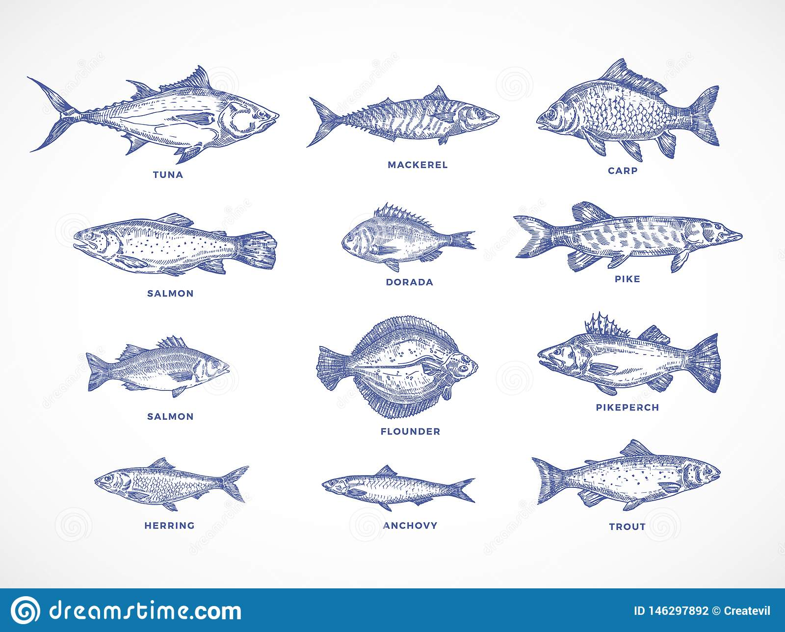 Hand Drawn Ocean Sea River And Lake Fishes Set A