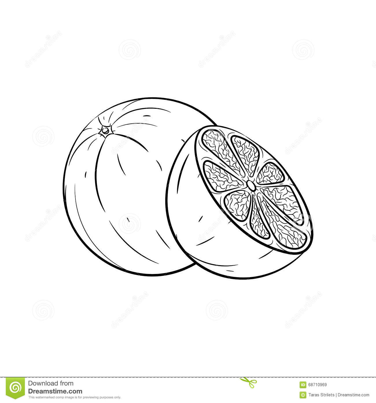 Hand Drawn Orange Sketches Stock Vector Illustration Of