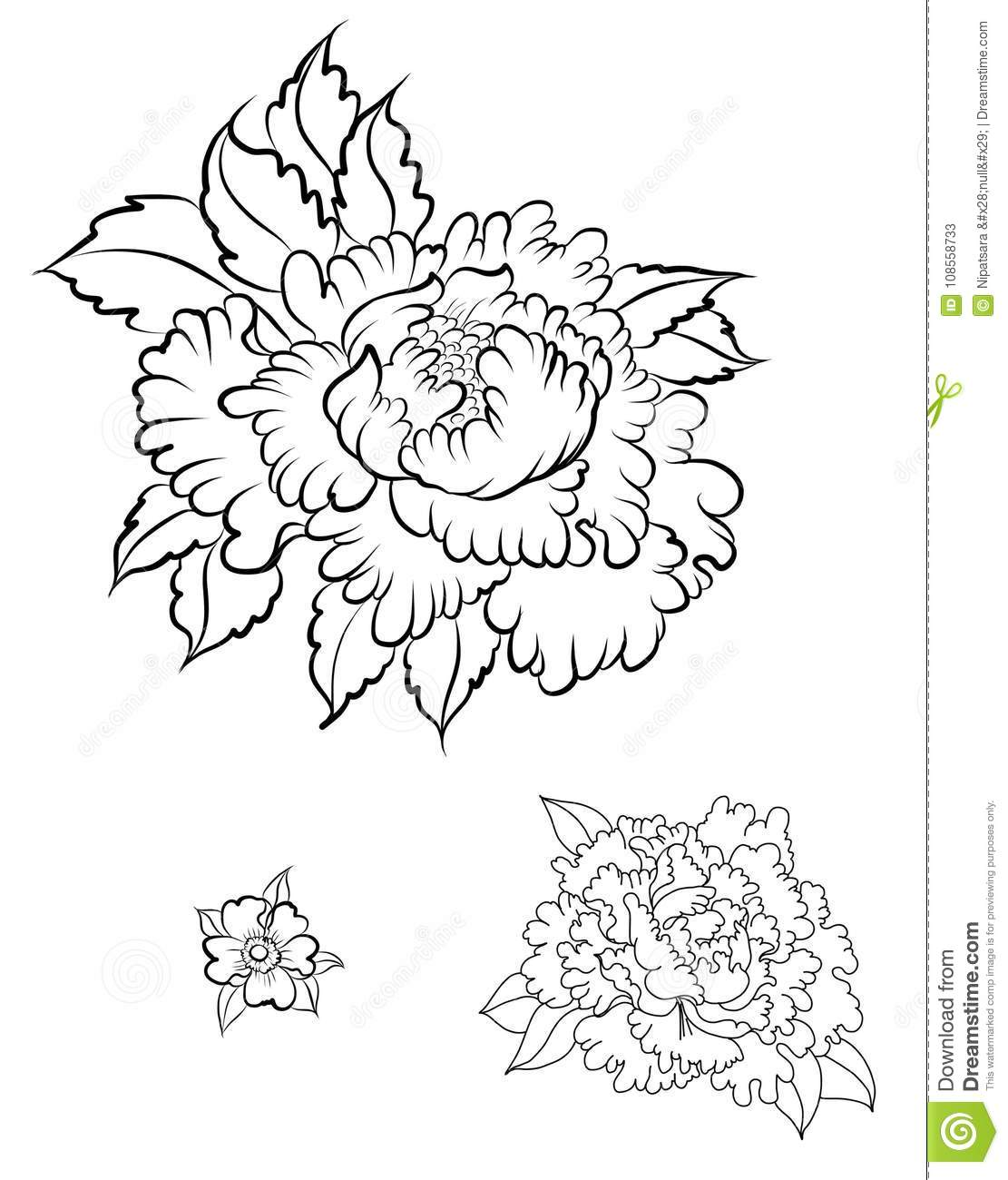 Peony Tattoo Design Drawing