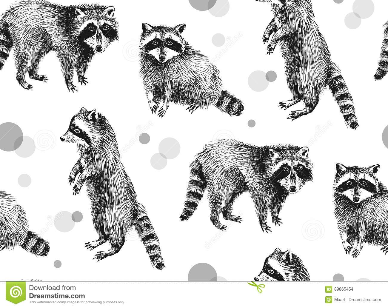 Raccoons Cartoons Illustrations Amp Vector Stock Images