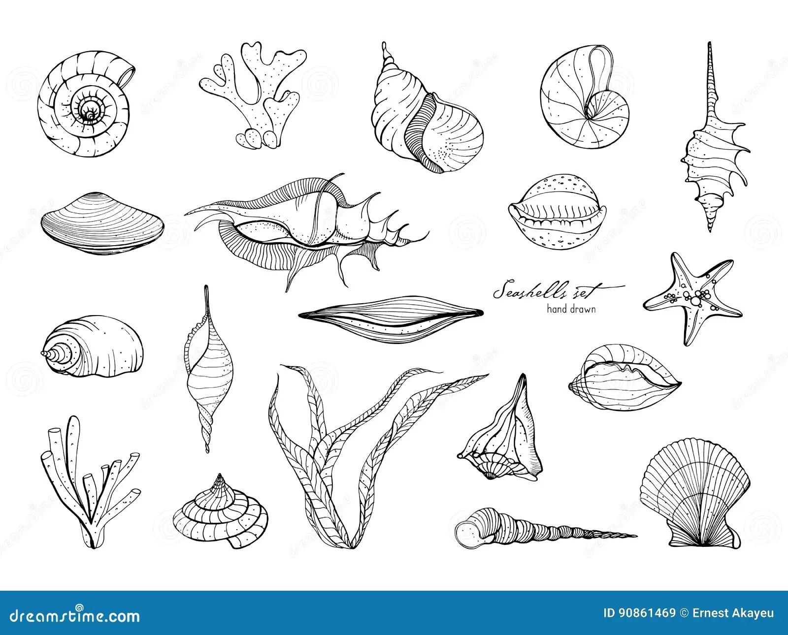 Hand Drawn Seashells Collection Set Of Seaweed Coral