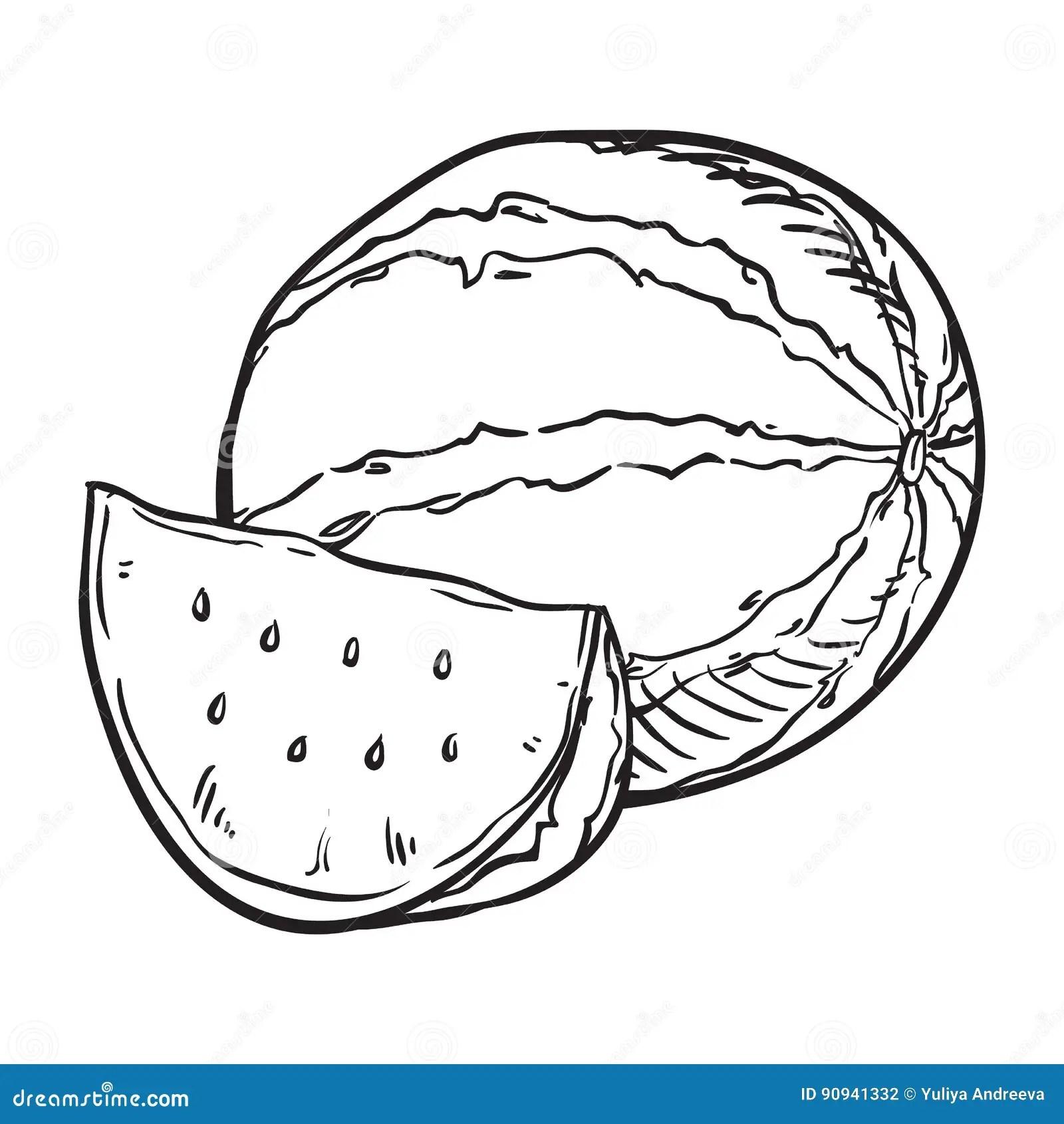 Hand Drawn Sketch Watermelon Illustration Stock Vector