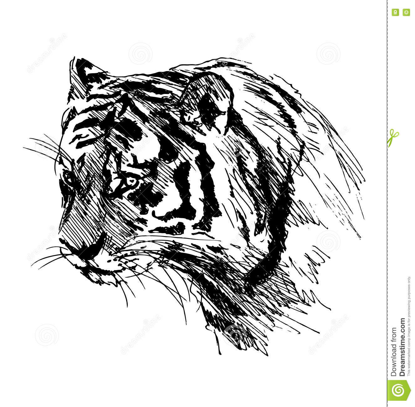 Hand Sketch Of The Head Of The Tiger Stock Vector