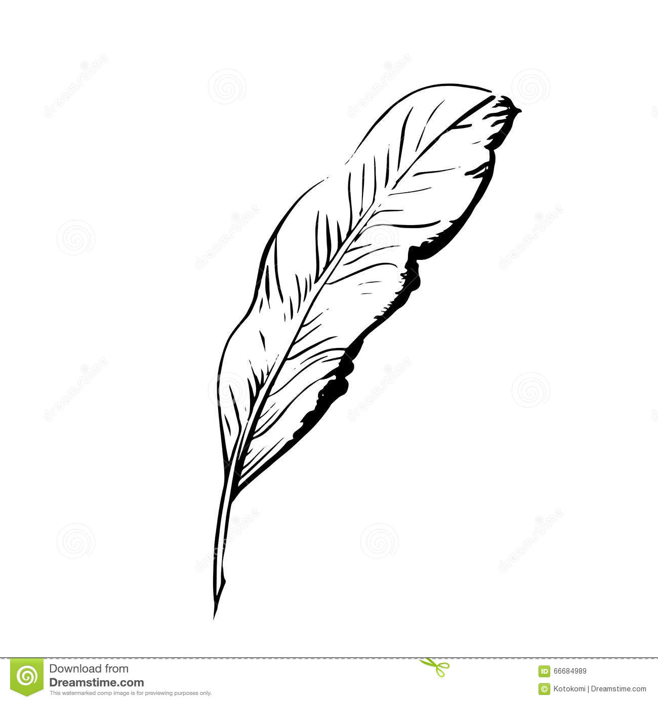 Handdrawn Bird Feather Symbol Of Knowledge Writing And