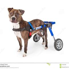 Wheel Chairs For Dogs Metal Folding Patio Bistro Chair Target Handicapped Staffordshire Bull Terrier Dog In Wheelchair