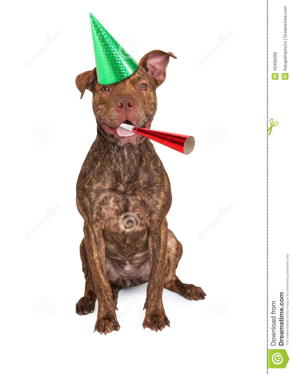 Dog With Hat Maker : maker, Happy, Party, Stock, Image., Image, Funny,, 49468289