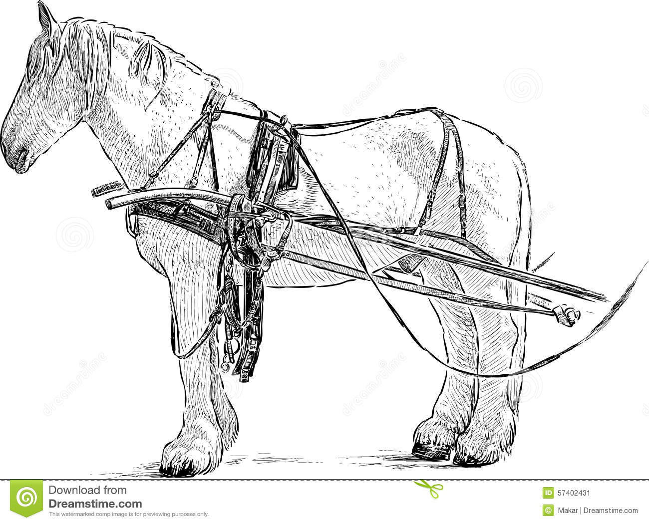 Harnessed Horse Stock Vector Illustration Of Sketch