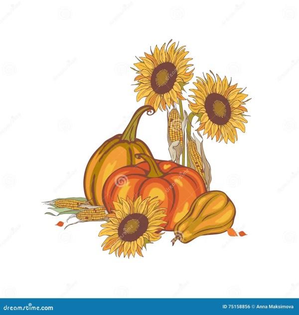 harvest corn sunflower and pumpkin