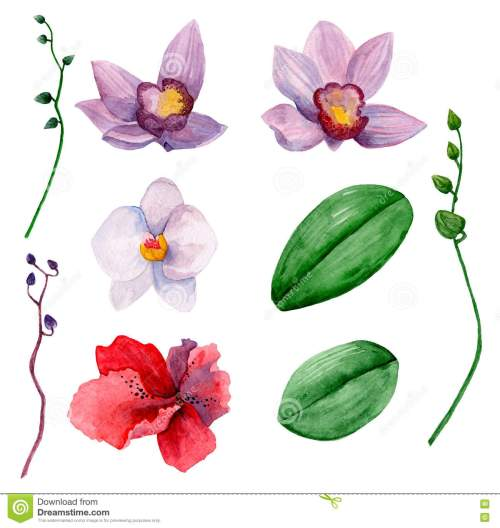 small resolution of hawaiian flowers vector clipart