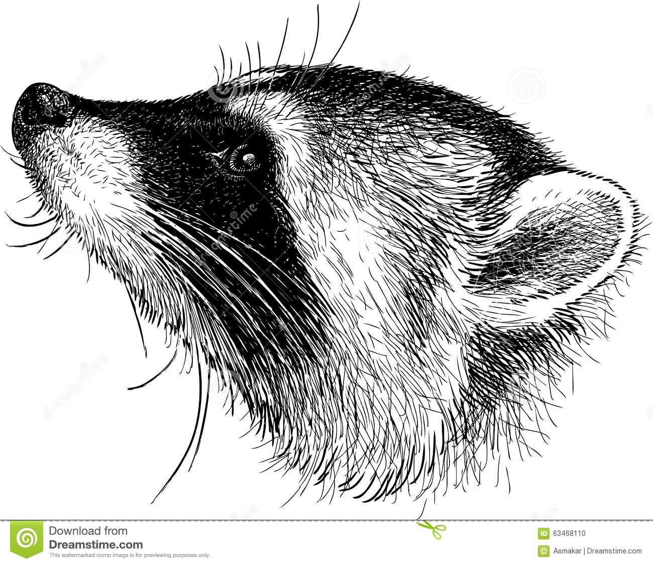 Head Of Raccoon Stock Vector Illustration Of Hand Nose