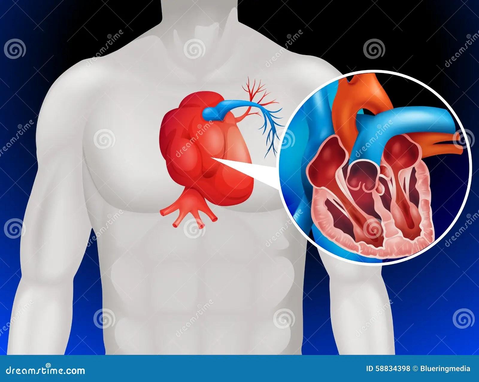 hight resolution of heart disease diagram in detail