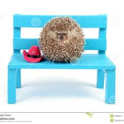 Small Ball Chair High Stool Hedgehog On A Stock Images Image 33983814