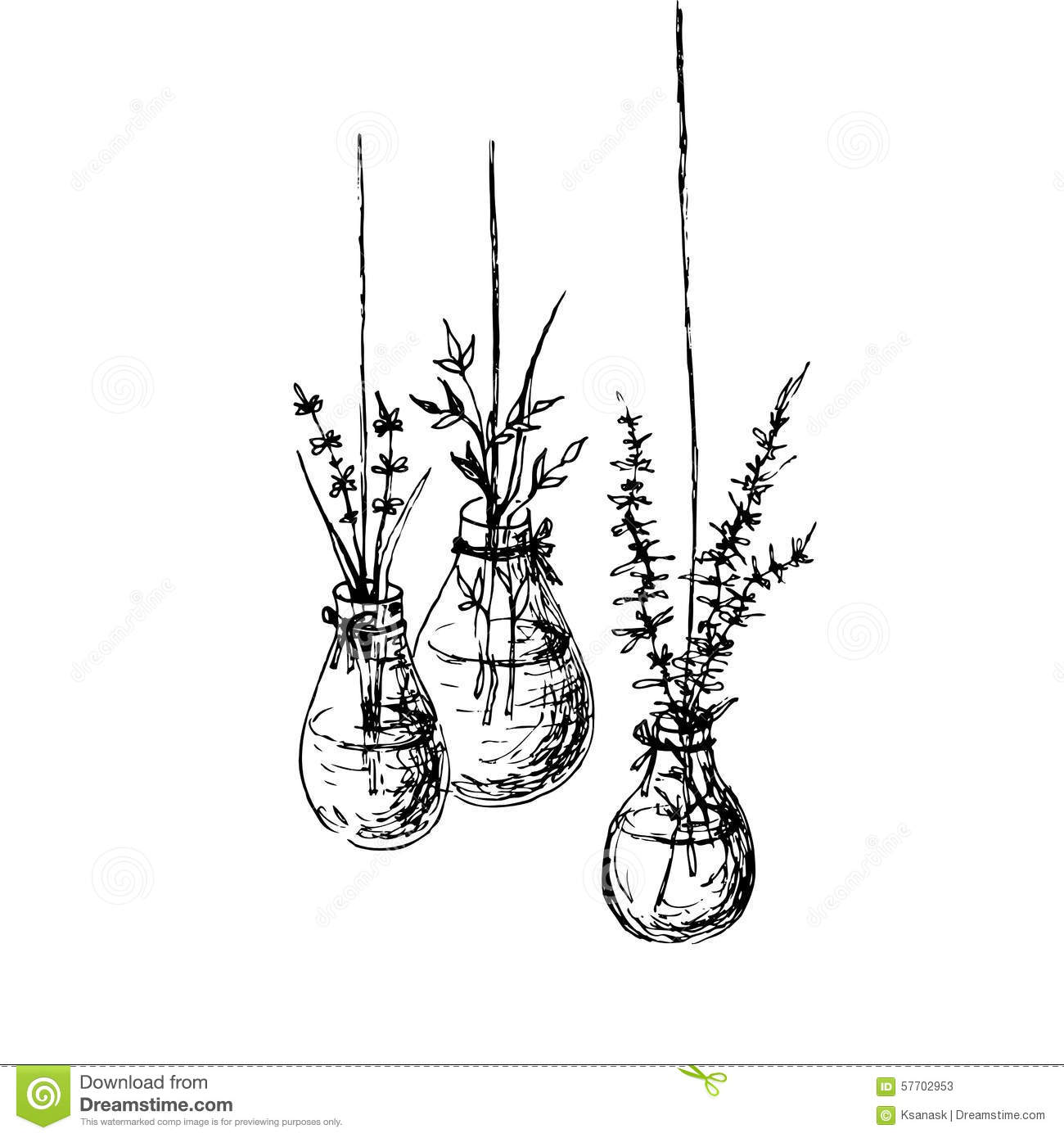 Herbs In Hanging Vases Ink Drawing Stock Vector