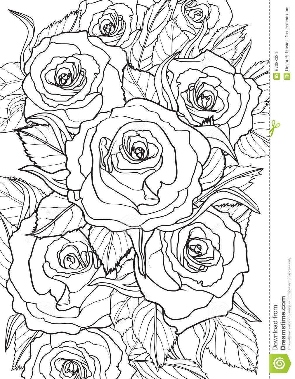 Roses stock vector. Illustration of relax, floral, graphic