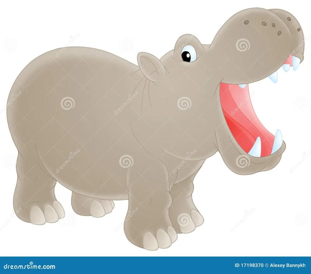 medium resolution of hippopotamus