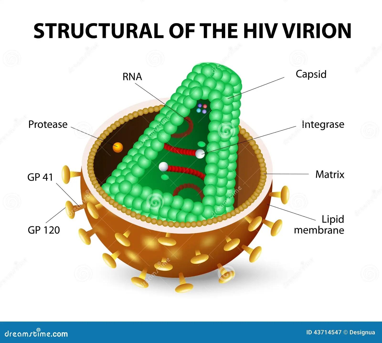 Hiv Virion Stock Vector