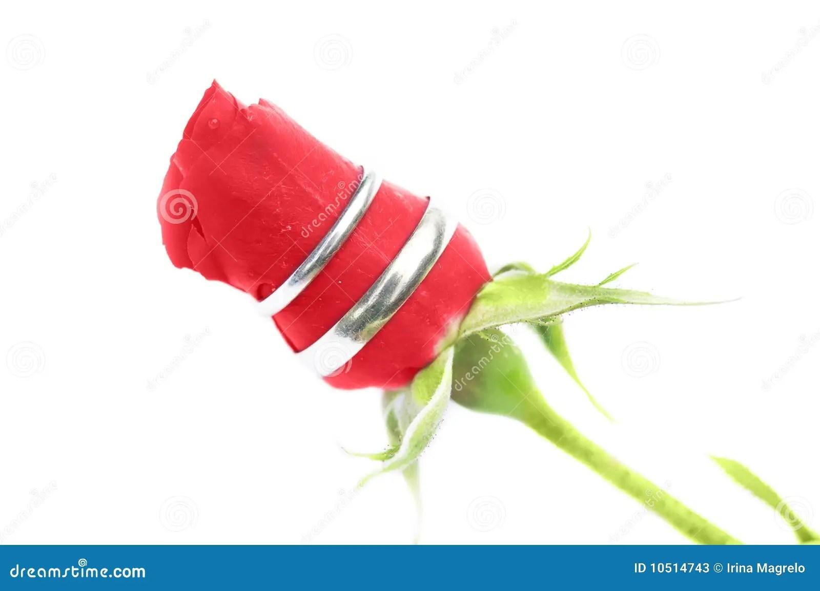 Hochzeitsringe Auf Einer Rose Stockfotos  Bild 10514743