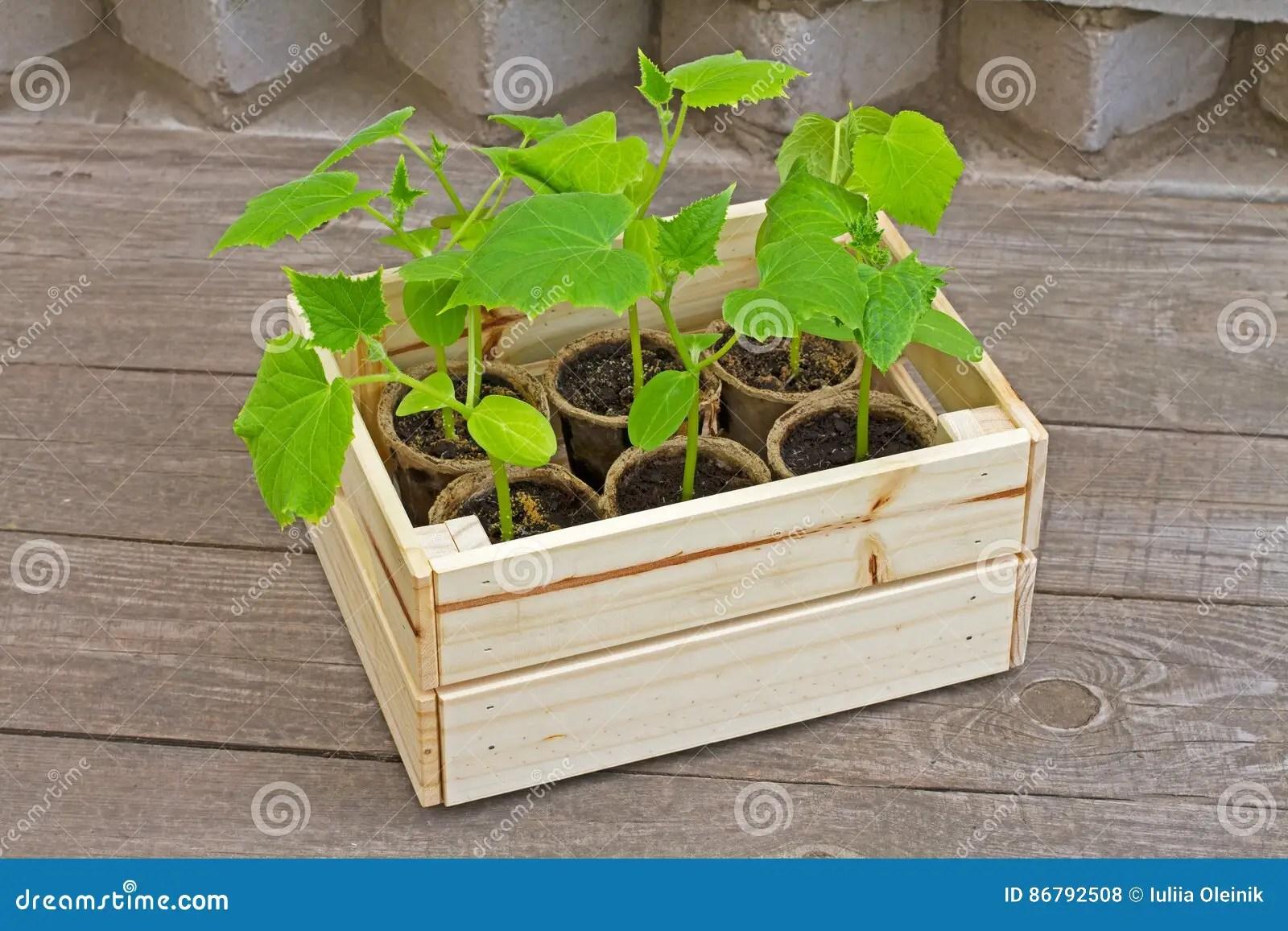 Kisten Deko Garten