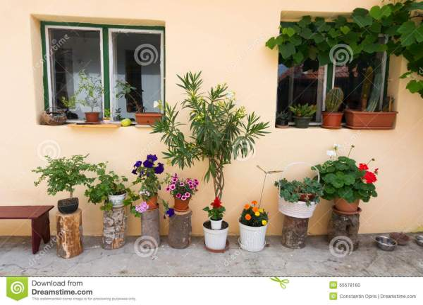 Home Flower Pots Decoration Stock Photo - Image of growm ...