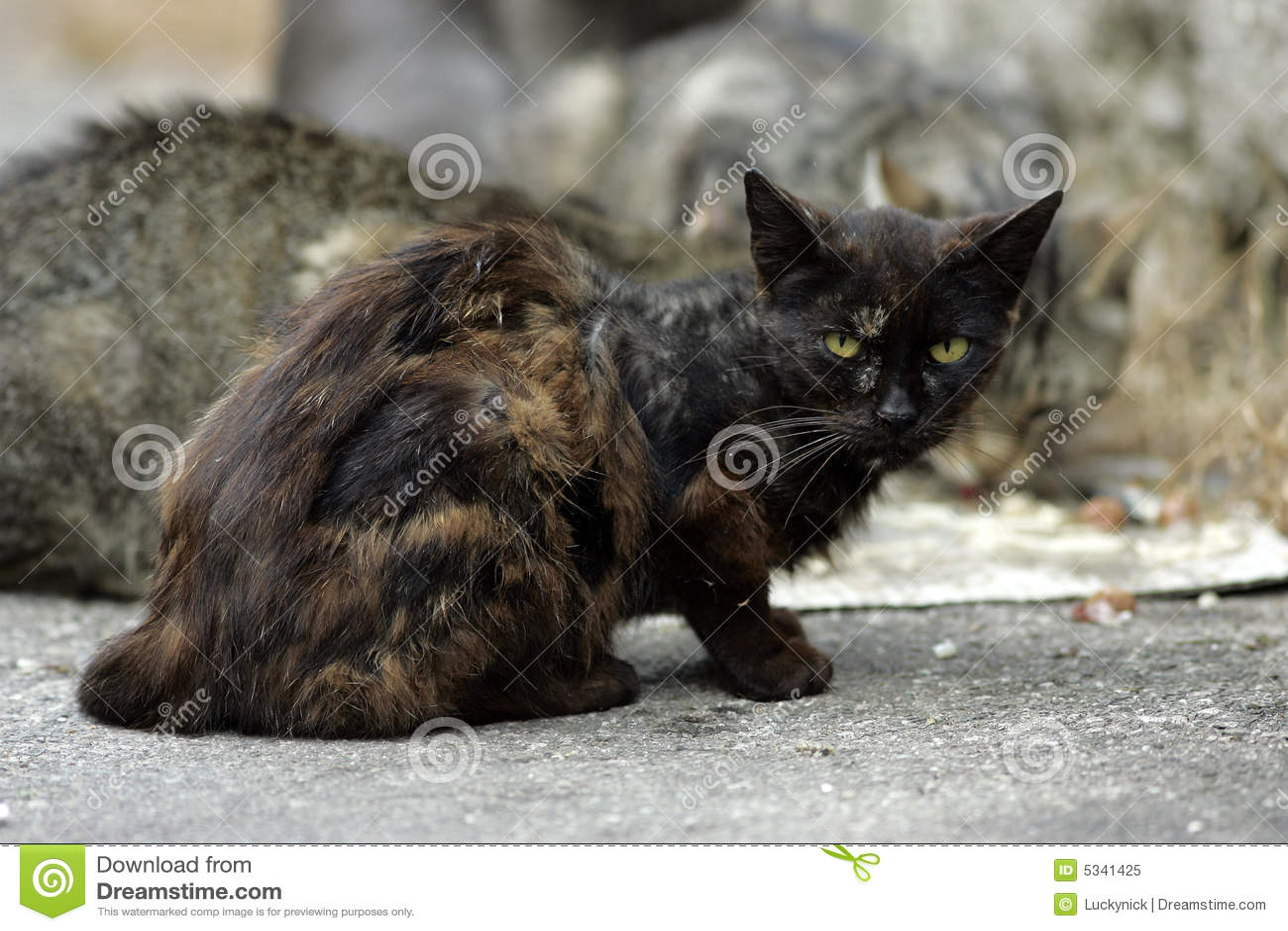 Homeless Cats Royalty Free Stock Photo  Image 5341425