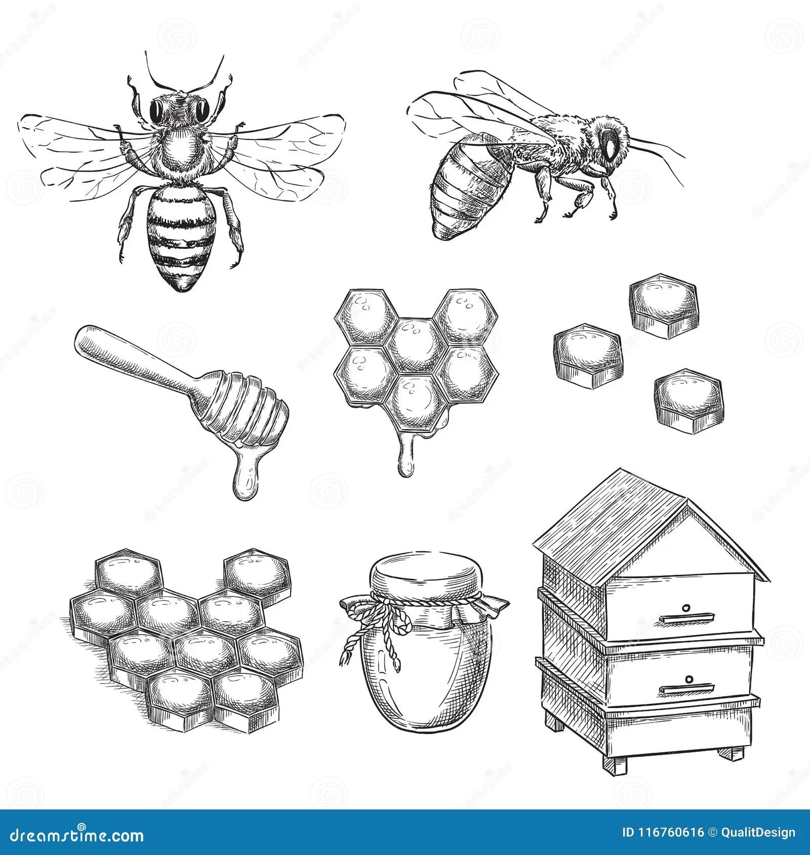 Bee Amp Honey Watercolor Clipart Wreath Pot Of Honey Honeycomb