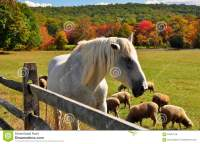 Hopewell Furnace, PA: Grazing Sheep And Horse Stock Photo