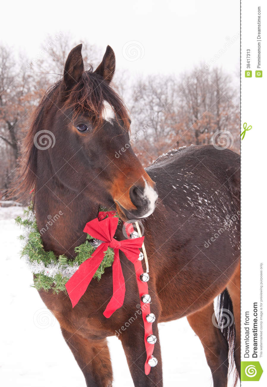 Horse With A Christmas Wreath And Jingle Bells Stock