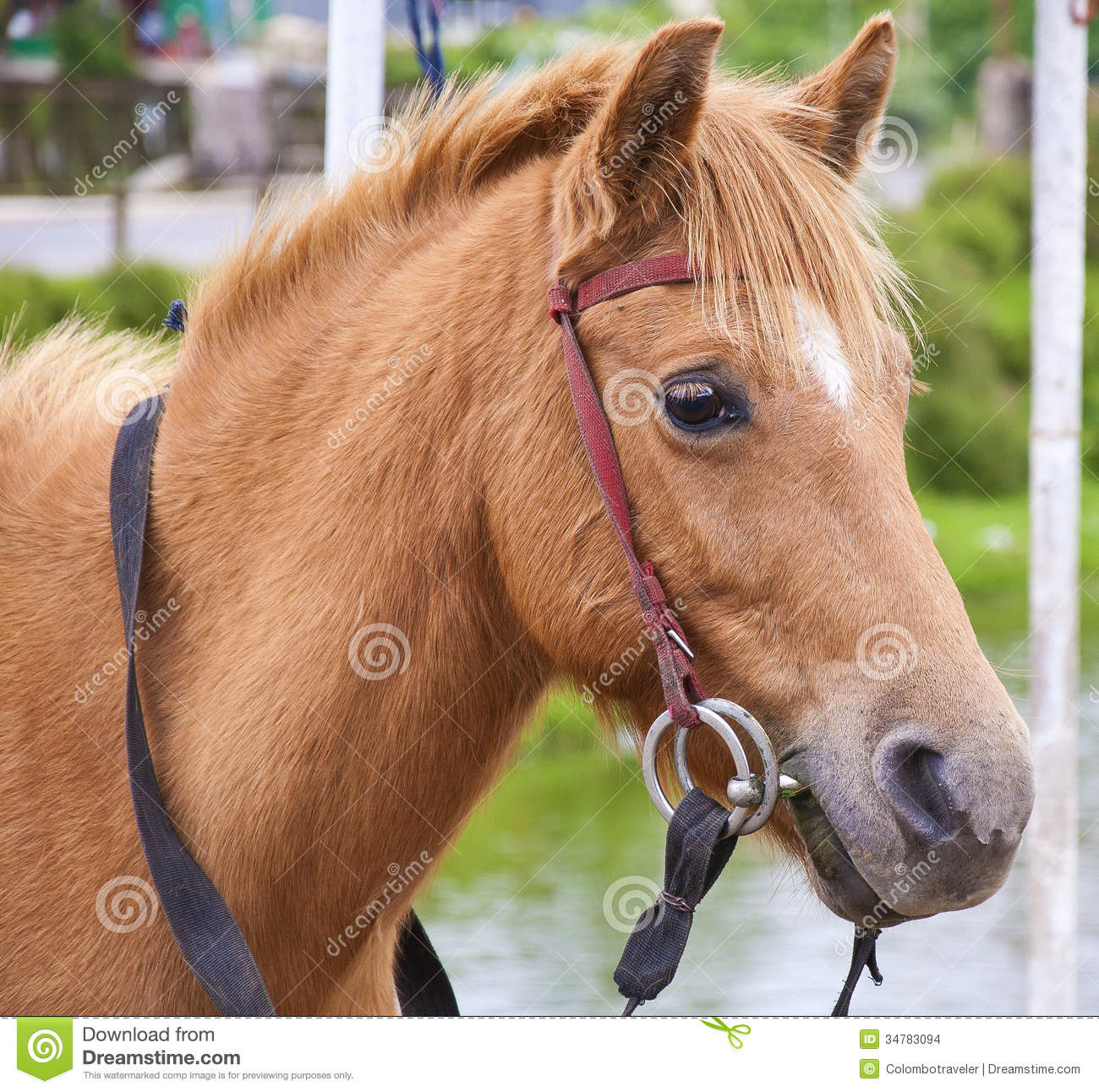 Horse stock photo Image of animal outdoor horse