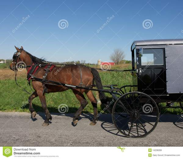 Horse Drawn Amish Carriage Royalty Free Stock