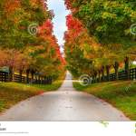 Horse Farm Alley Stock Photo Image Of Pavement Road 36130870