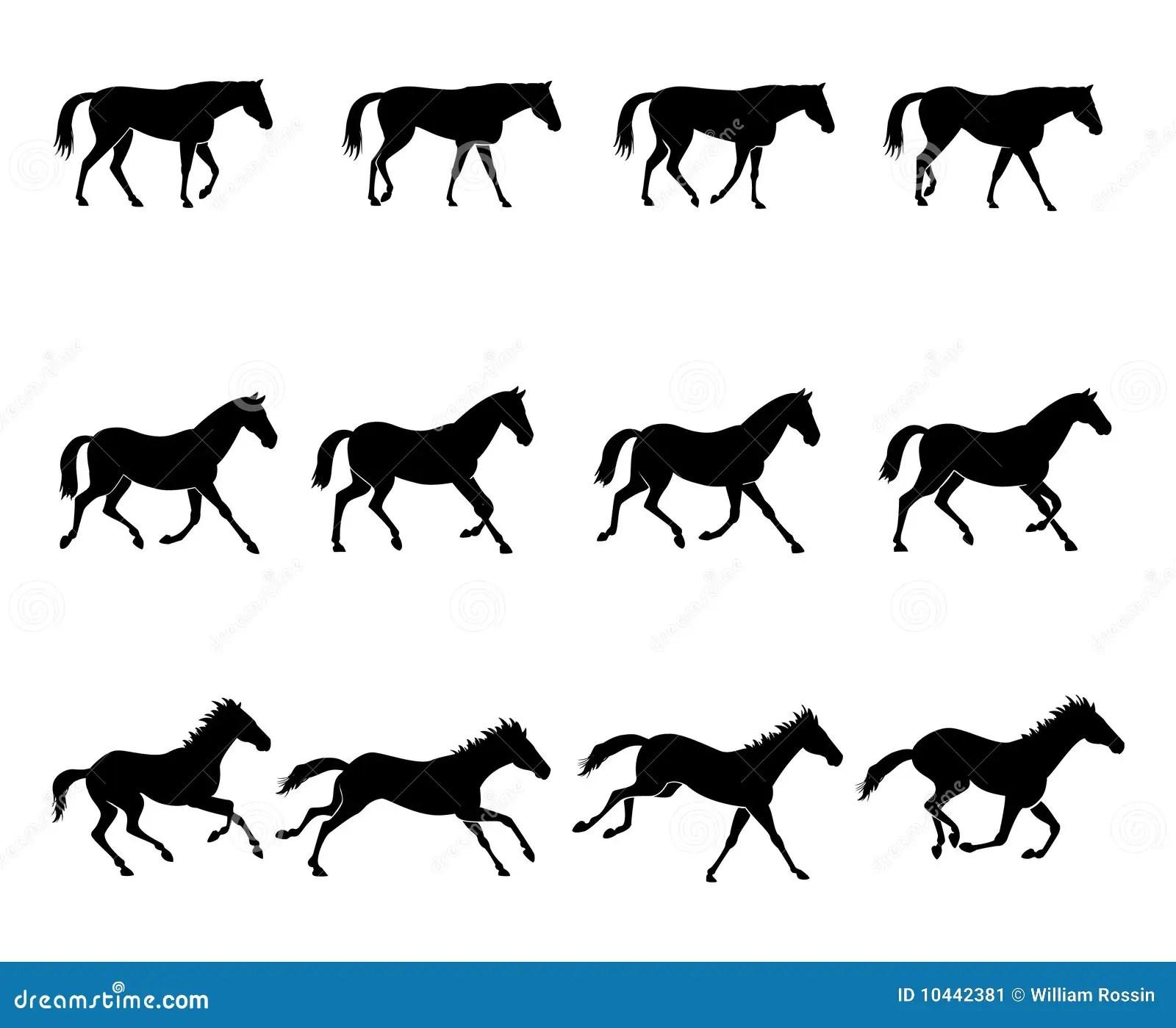 Horse Gaits Stock Image
