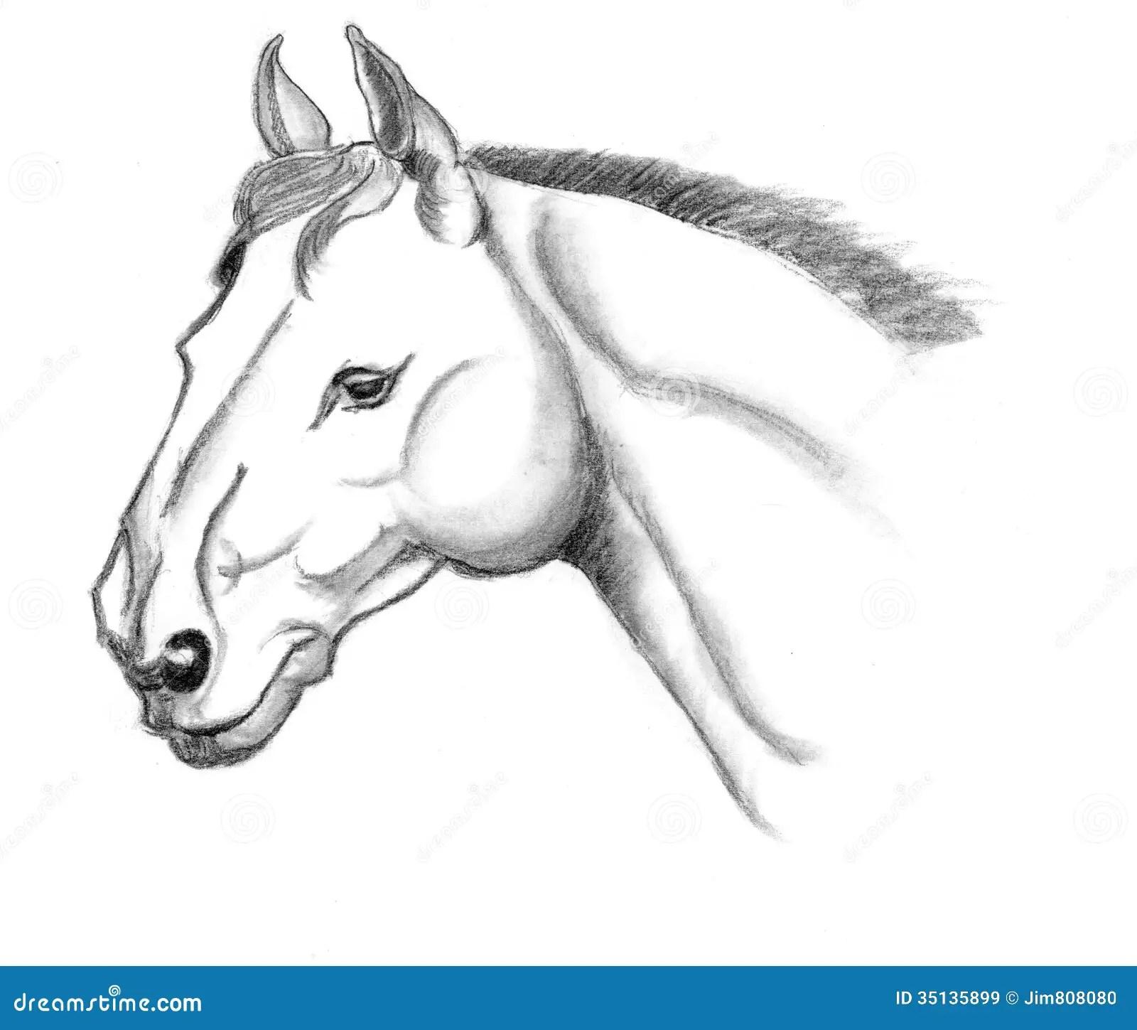 Horse Head Sketch Stock Illustration Illustration Of