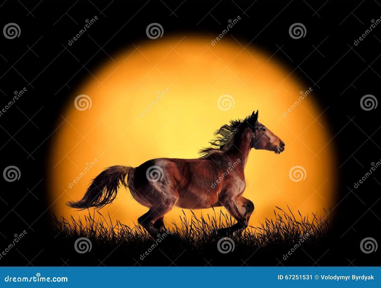 Horse Running On The Background Of Sunset Stock Photo