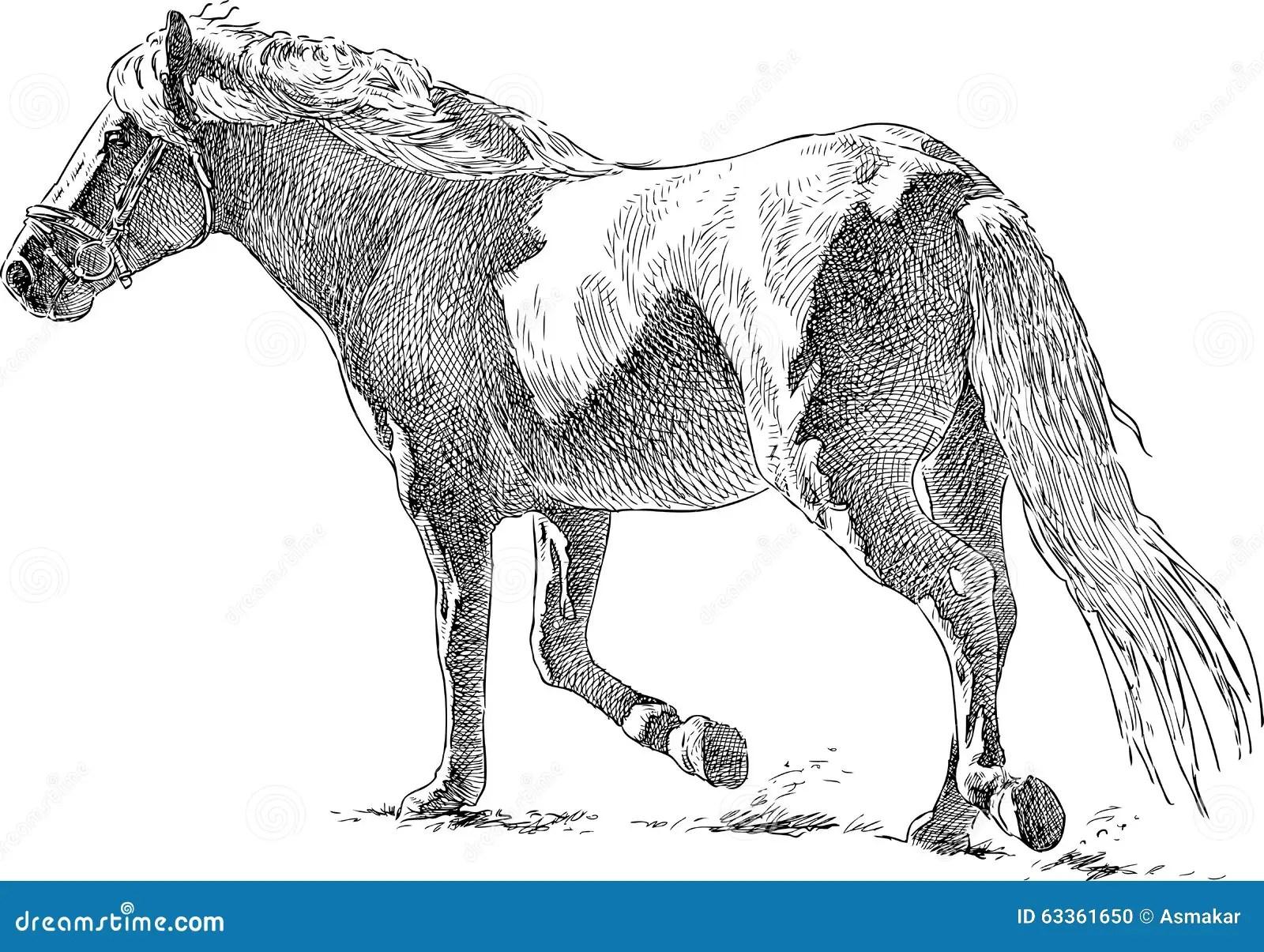 Horse Runs Stock Vector Illustration Of Beauty Tail