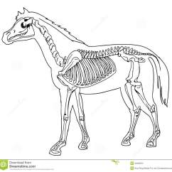 Horse Skull Diagram Land Rover Discovery 2 Td5 Wiring Skeleton Stock Photography Image 33356872