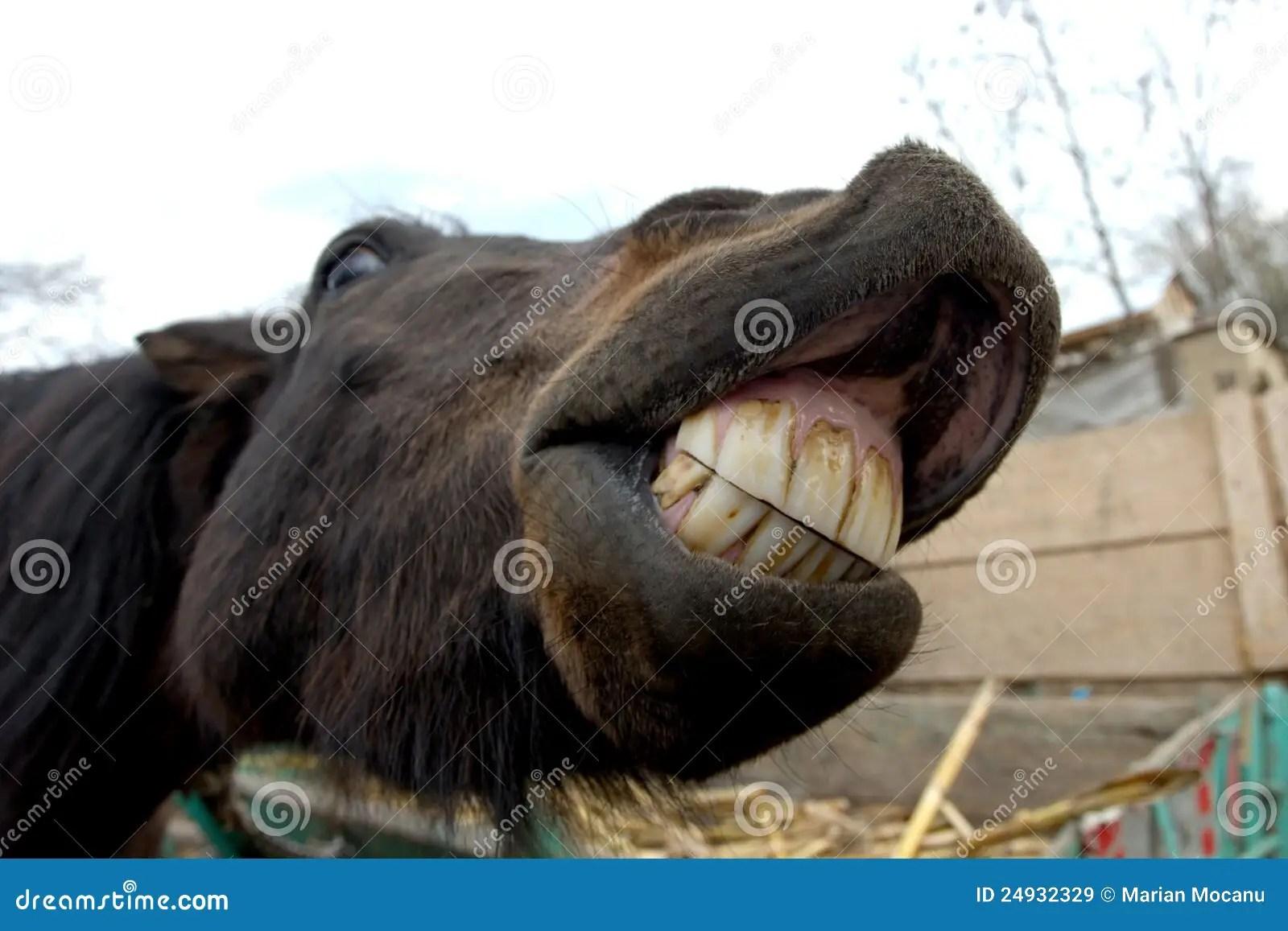 Animal Farm Wallpaper Horse Smile Stock Image Image Of Sneeze Farm Meadow