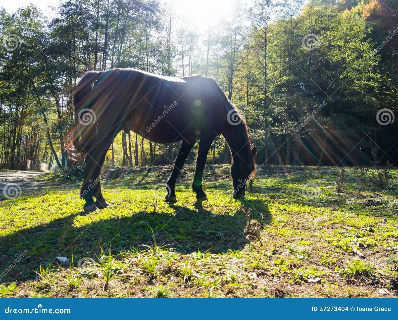 Horse In Sun Light Stock Photo Image Of Sunlight