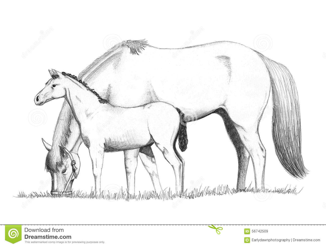 Horses Feeding Drawing Stock Illustration Illustration Of