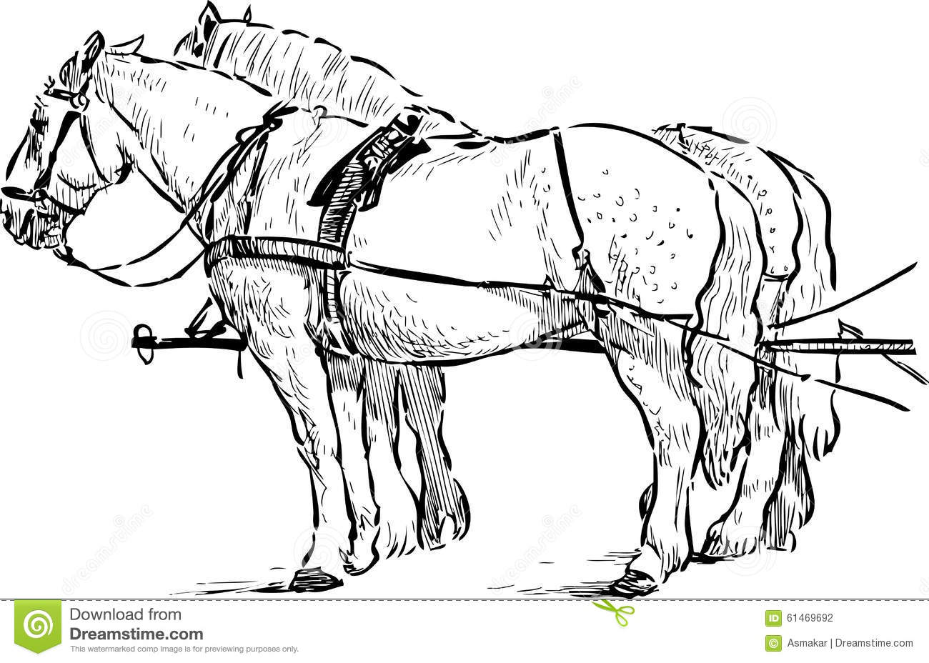 Horses in the harness stock vector. Illustration of tail