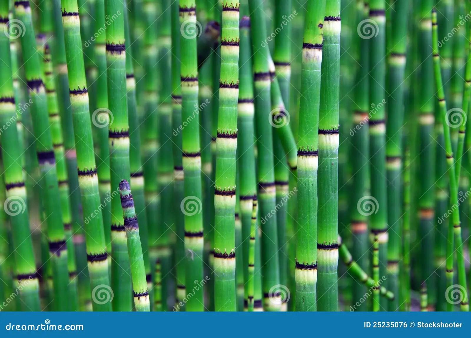 horsetail plant diagram emg 81 85 wiring 2 volume 1 tone fern anatomy elsavadorla