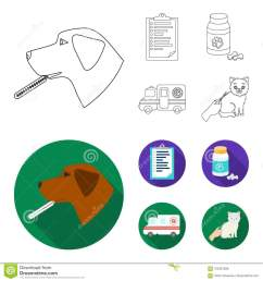 hospital veterinarian dog thermometer vet clinic set collection icons in outline flat style vector symbol stock illustration  [ 1300 x 1390 Pixel ]